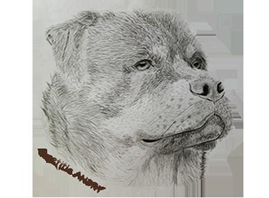 DOG SPIRIT 47