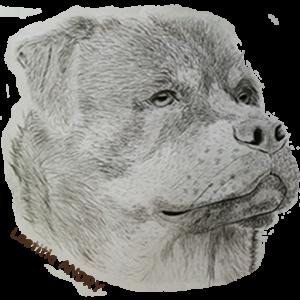 Logo Dog Spirit