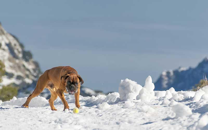 La joie des jeux dans la neige