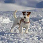 La montagne avec son chien pour les vacances d'hiver
